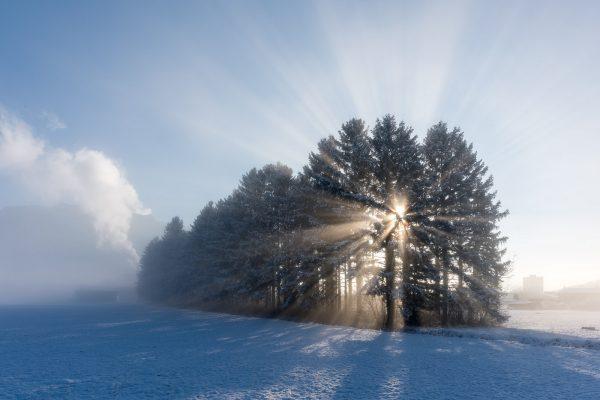 Grabserriet im Nebel