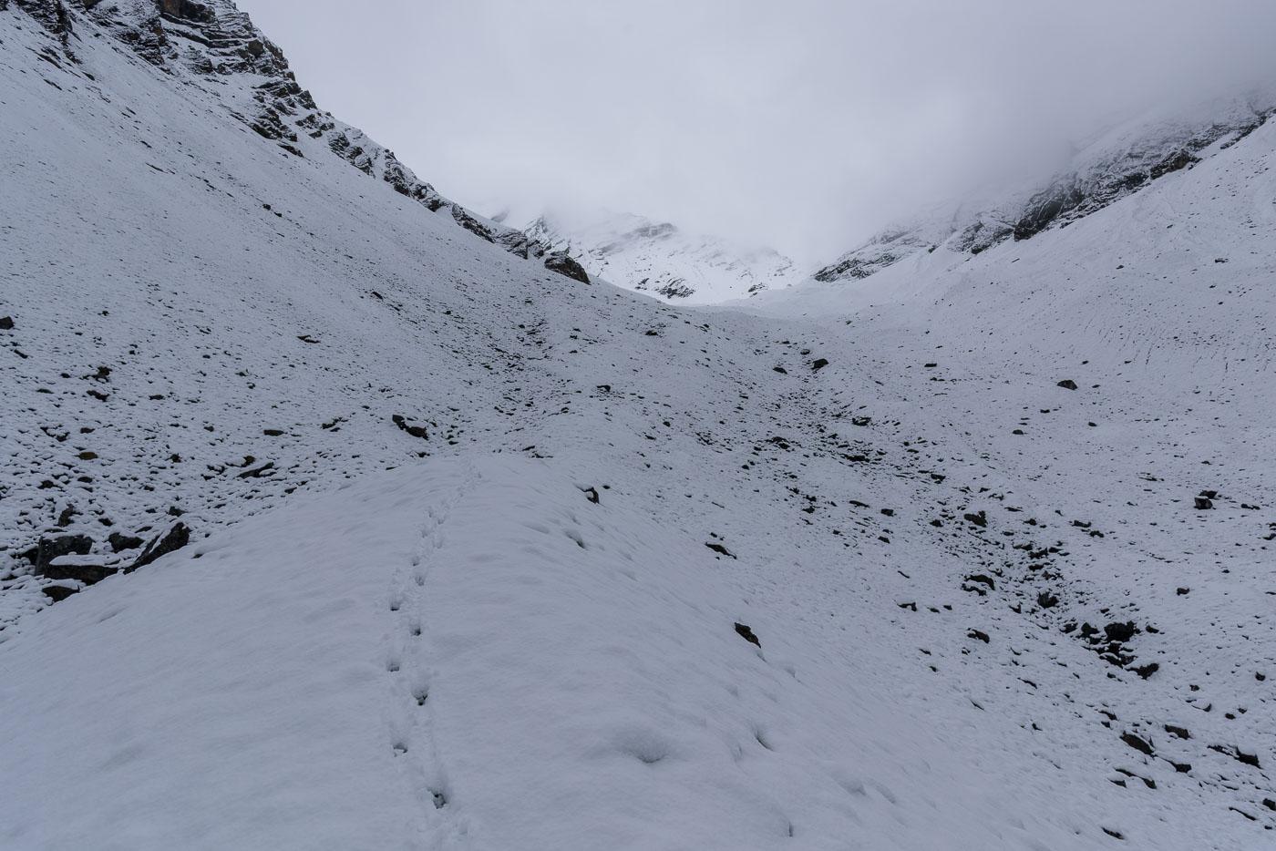 Gamsspuren auf dem Weg im Val Sassa