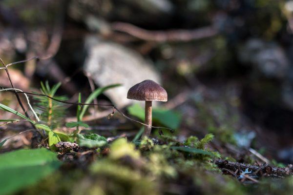 Unbekannter Pilz