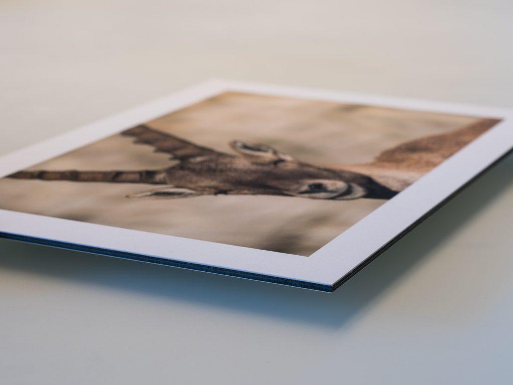 Fine Art Kollektion 3 mm Dibond