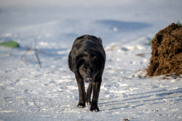 Odi, der Jüngere der beiden Hunde