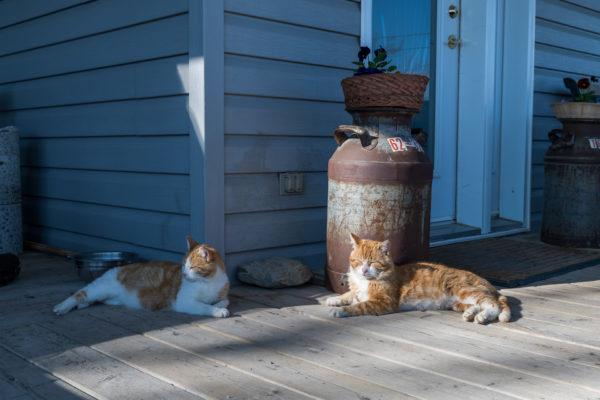 Katzen dürfen auf keinem Hof fehlen