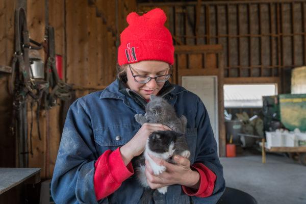 Zwei von vielen jungen Katzen