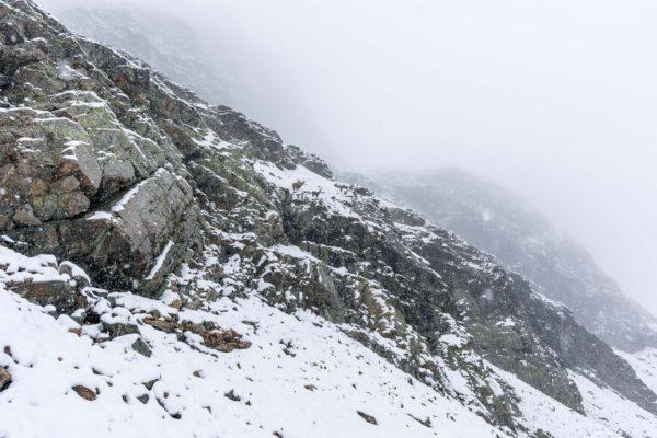 Auch die Steinböcke wurden vom Schnee überrascht