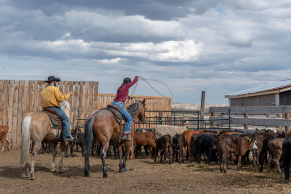 Cowgirls sind am Werk