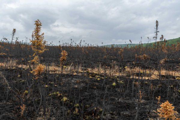 Vor wenigen Tagen hat es hier noch gebrannt