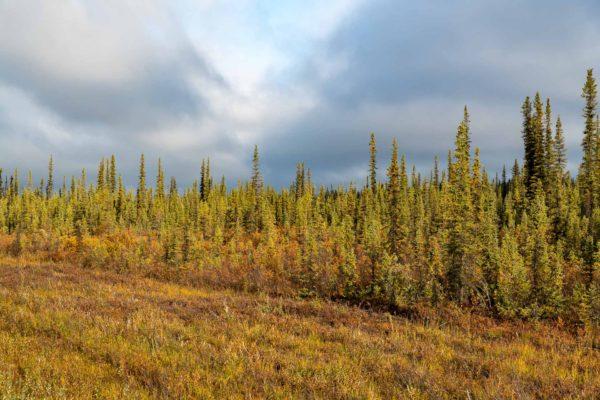 Ausserhalb von Dawson City wird es allmählich farbig
