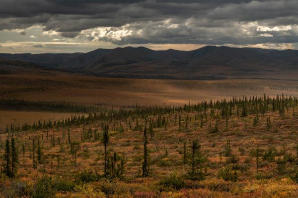 Tundra, Taiga