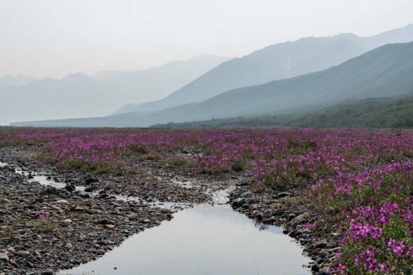 Der Dunst der Waldbrände zieht in den Denali Nationalpark.