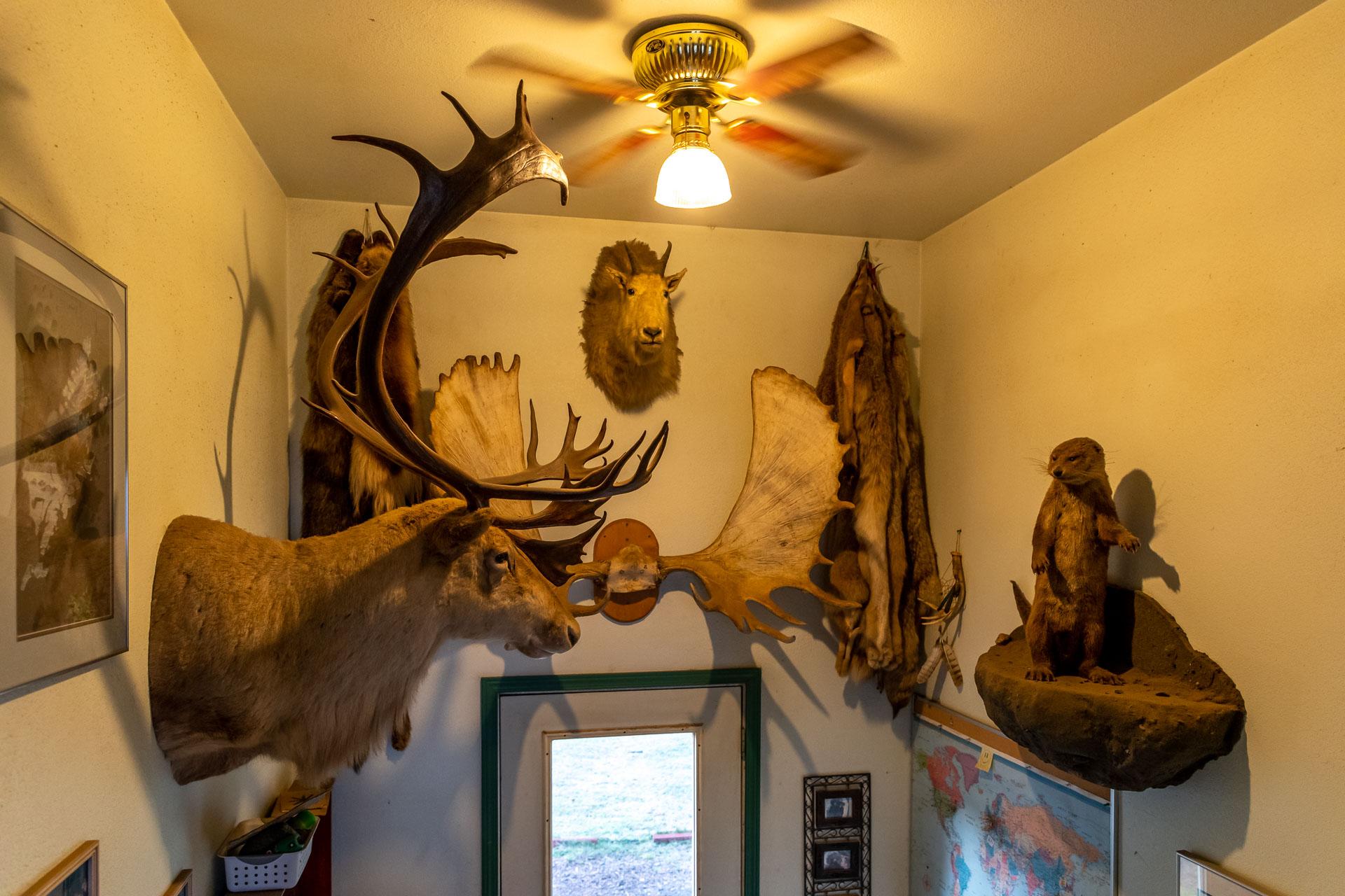 Die Jagdtrophäen über dem Eingang