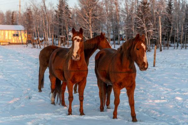 Drei der Sieben Pferde