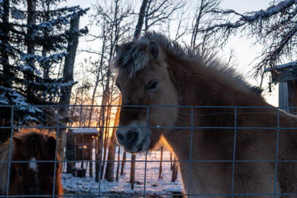 Das grosse Pony