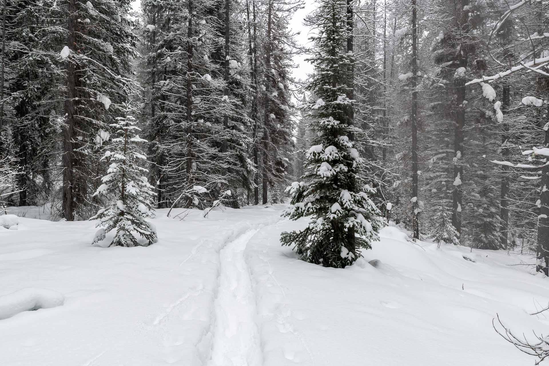 Schneeschuh Weg zum Big Bend Zeltplatz