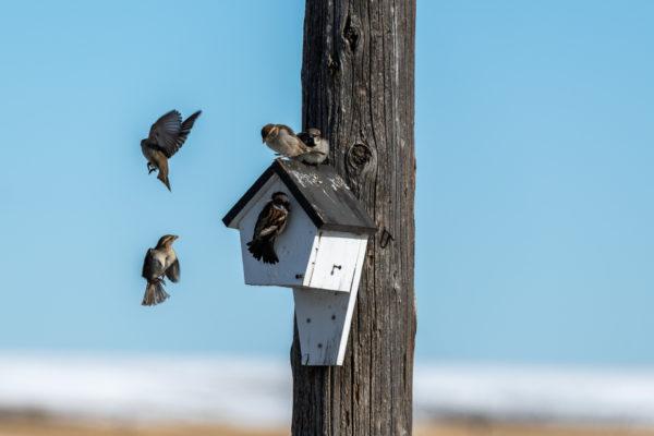Das Vogelhaus ist gut besucht