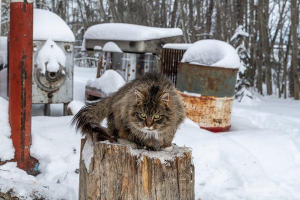 Die kuschel Katze