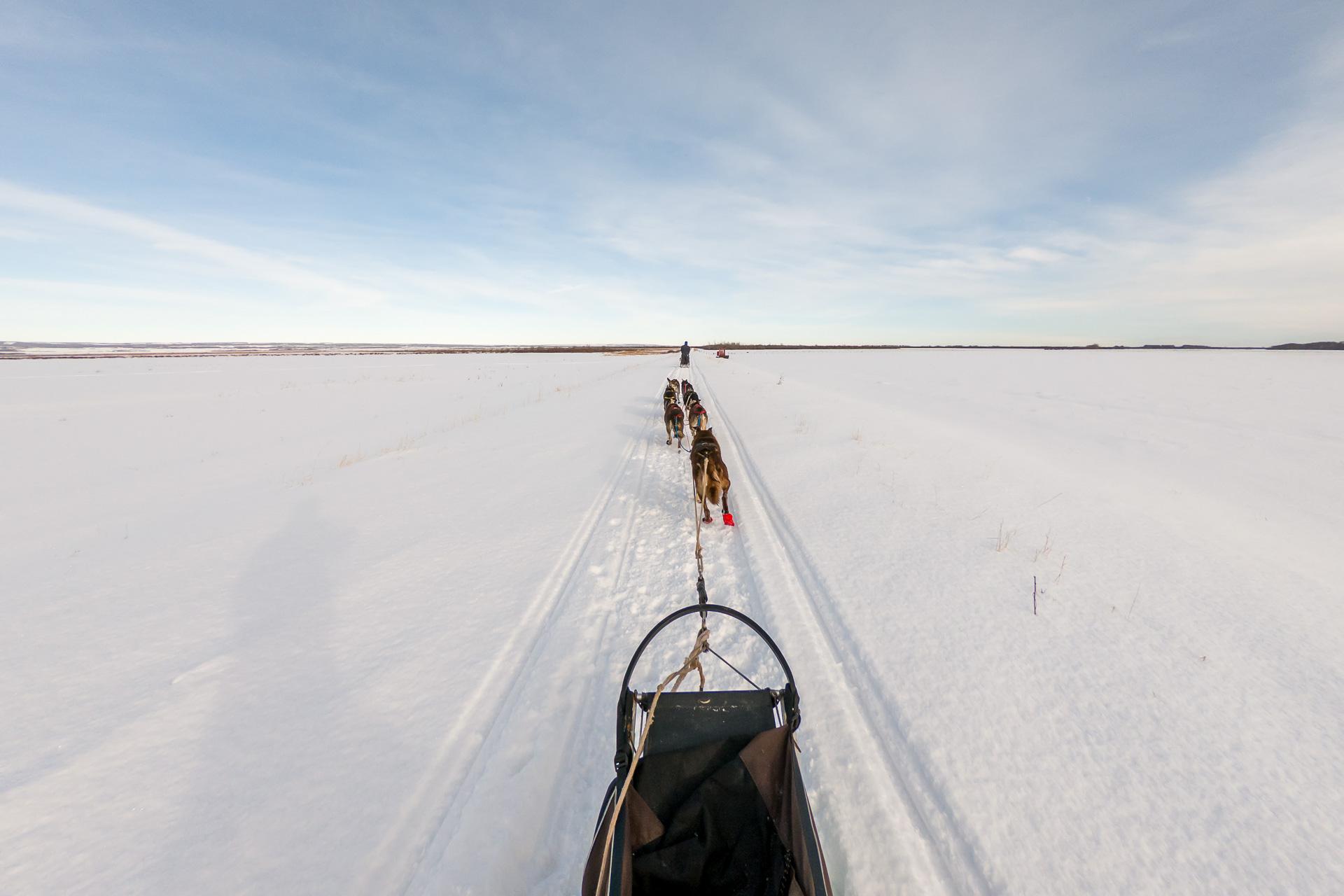 Trainingsfahrt mit 7 Hunden