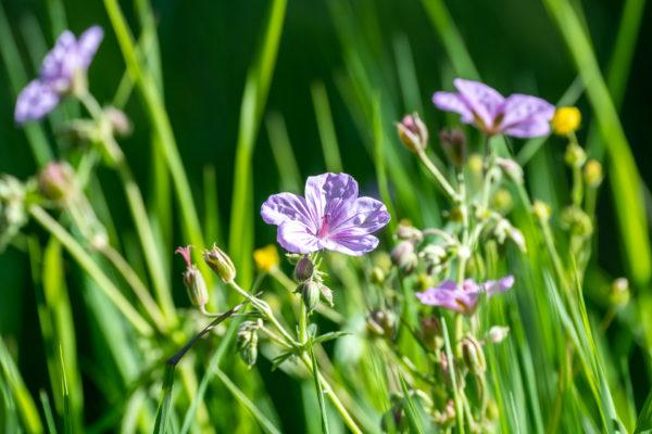 Blühende Blumen findet man überall.