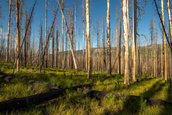 Vor vier Jahren hat dieser Wald gebrannt