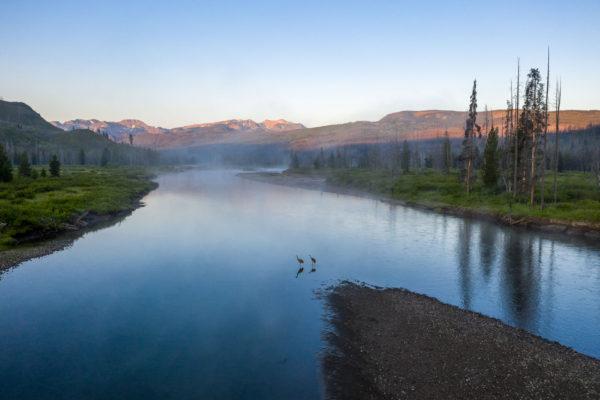 Kanada Kranich [Grus canadensis] Snake River